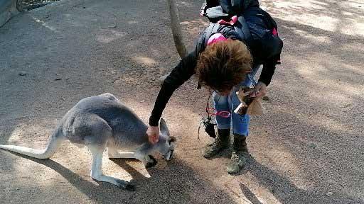 Kangourous au Billabong Sanctuary arrêt lors de notre circuit en Australie côte Est