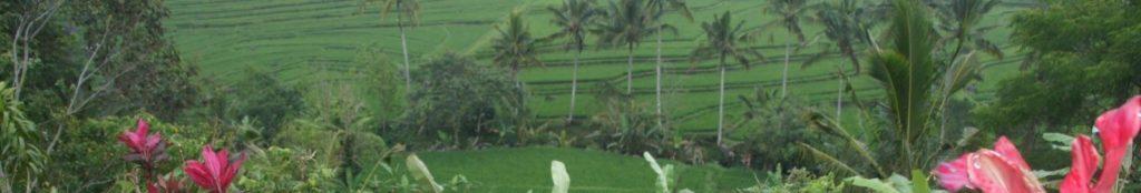 Image pour présenter itinéraire INDONESIE en 15 jours faisant partie des ITINERAIRES DE VOYAGES
