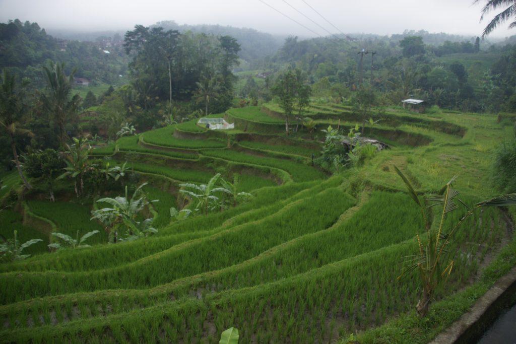 Les rizières en terrasses NORD BALI