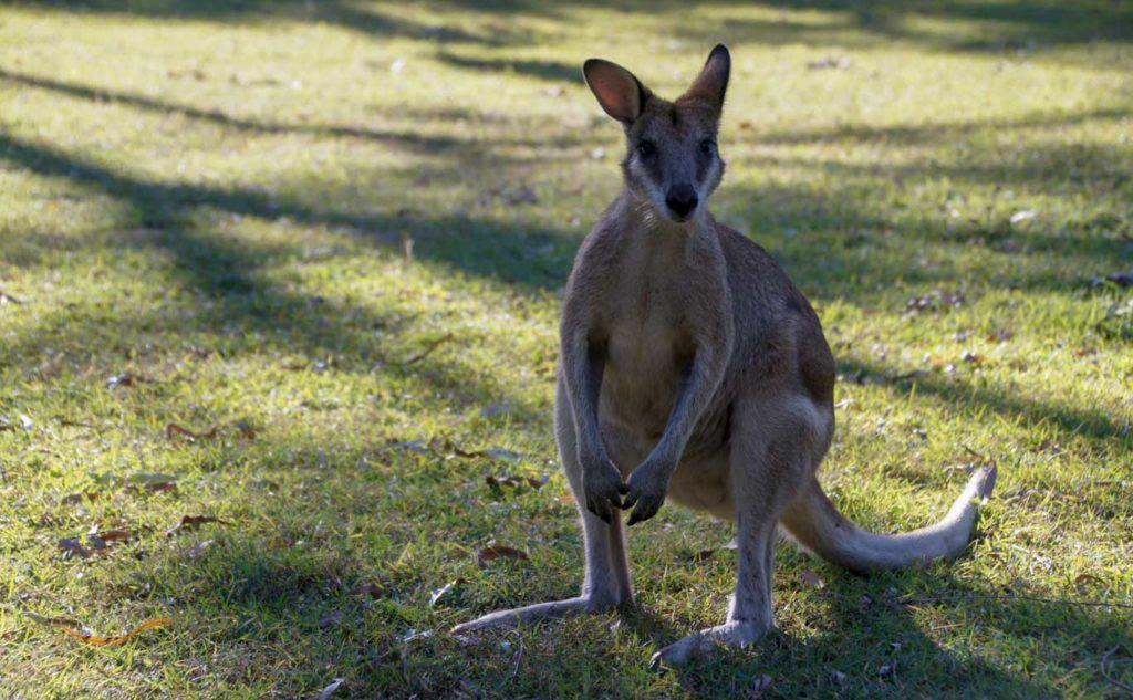 Road trip en Australie Queensland Etape à Hillsborough Cap Beach