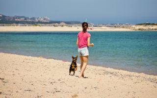 Location avec chien Bretagne - Meilleures locations Morbihan et Finistère BRETAGNE SUD
