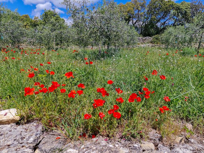 Ballade sur les sentiers de Provence