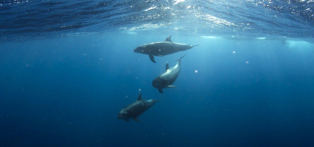 Nager avec les dauphins à la Réunion meilleurs endroits
