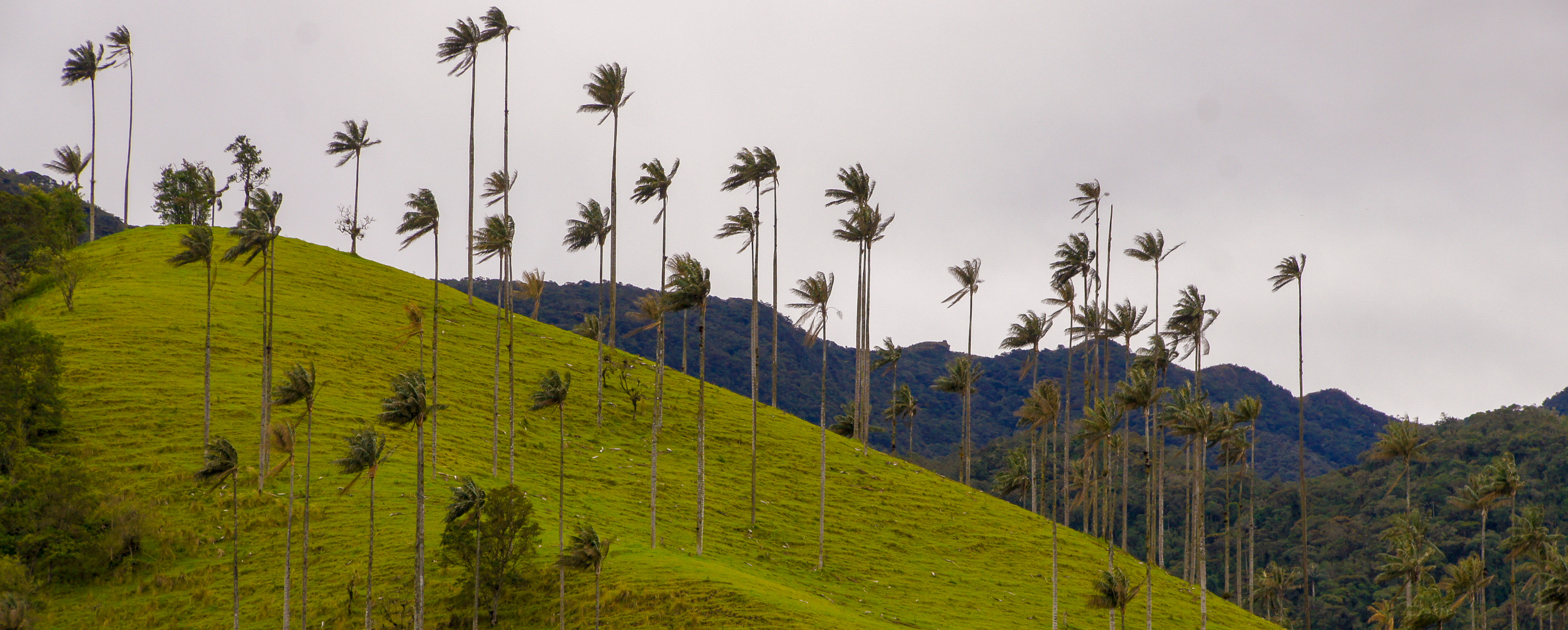 REGION DU CAFE - VALLEE DE COCORA