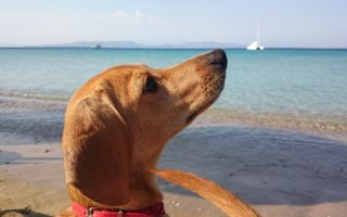 Location vacances avec chien Vendée - Location bord de mer et piscine avec chien admis