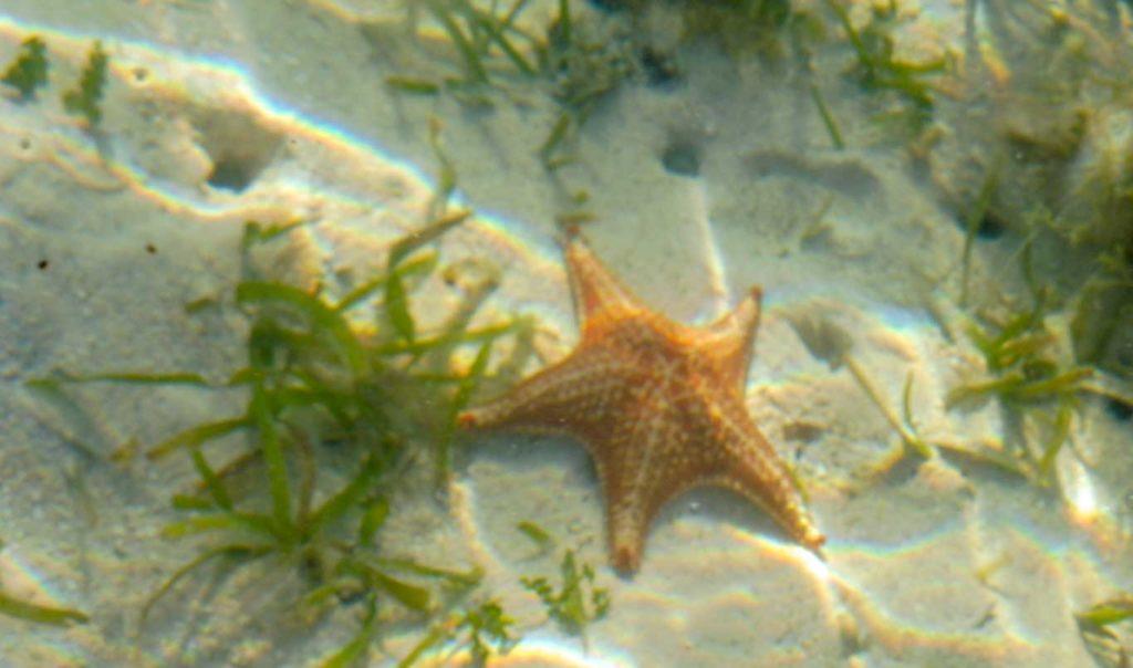 plus belles plages Panama - playa de las estrellas Bocas del Toro