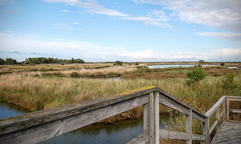 Que faire à l'Ile d'Oléron : Chenal et marais de la Baudissière