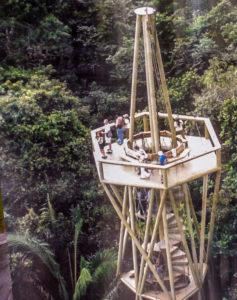 Que faire autour du Canal de Panama - Tour de la forêt