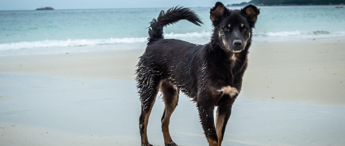 Location vacances avec chien Landes