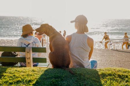 Location vacances avec chien ou Village vacances avec chien ? Comment choisir