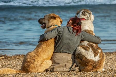 Trouver un Hôtel en Normandie acceptant les chiens - 2 meilleurs hôtels dog friendly