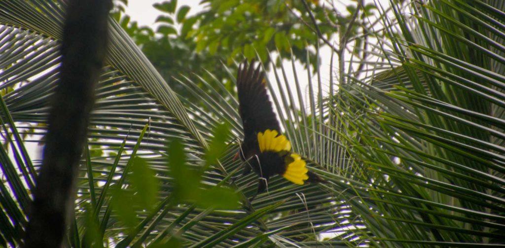 PARC NATIONAL PRES DU CANAL DE PANAMA