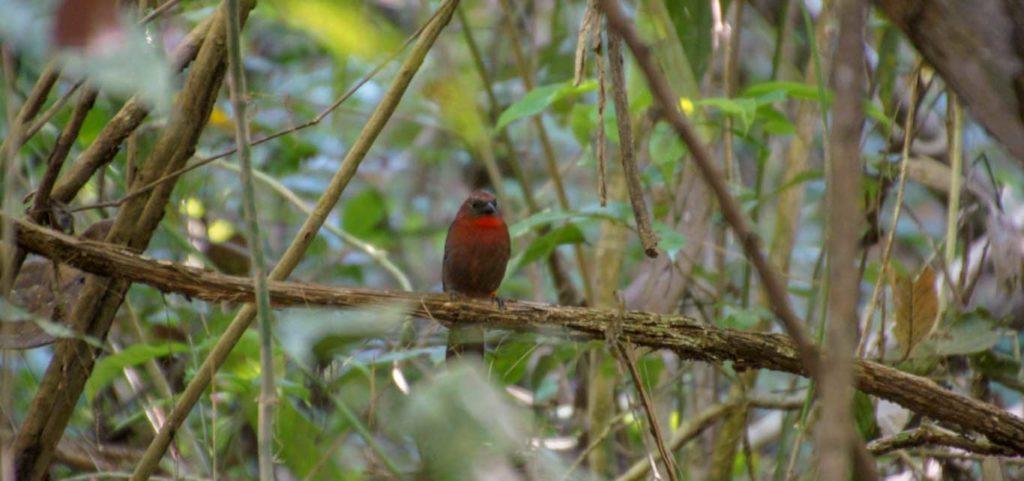 BOCAS DEL TORO - Forêt et oiseau