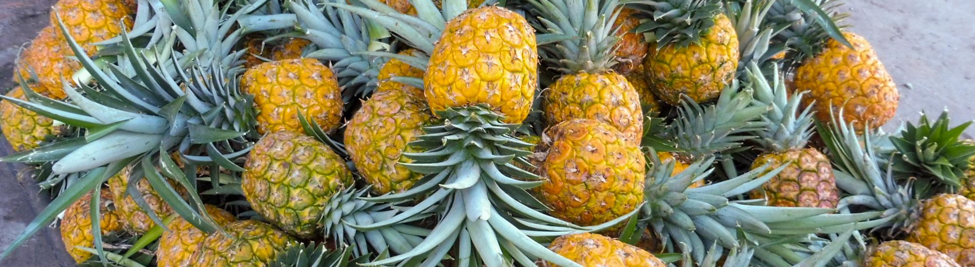 Ananas sur la route Salento Medellin