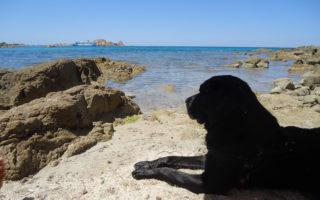 Meilleure location vacances bord de mer avec chien