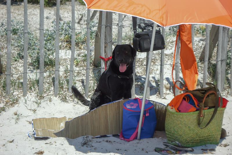 ¿Dónde ir de vacaciones en Francia con un perro?