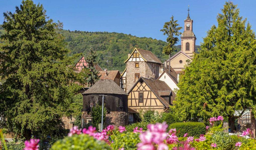 L'Alsace avec un chien - Meilleur hôtel acceptant les chiens en Alsace à Riquewihr et à Colmar