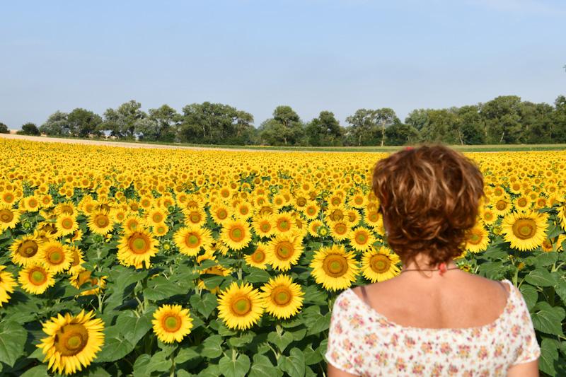 paysages de tournesols dans la campagne ariégeoise