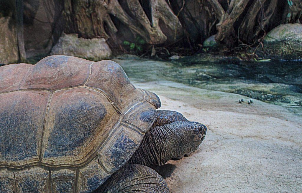 Que faire aux Seychelles en 10 jours : Enclos aux tortues géantes