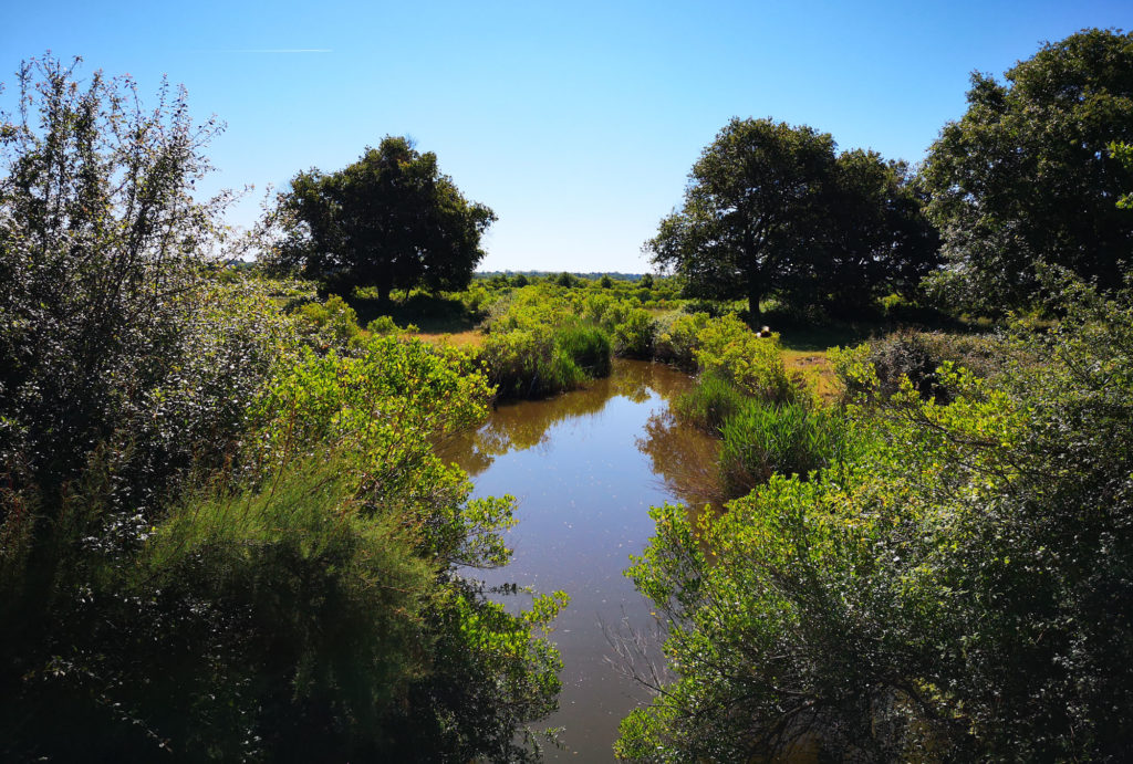 Réserve Ornitologique du Teich dans mon programme d'activités en 3 jours