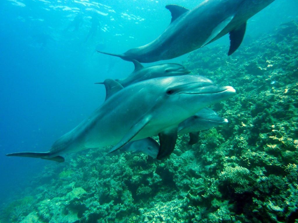 Nager avec les dauphins à la réunion
