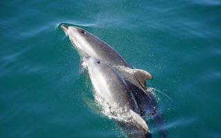 Nager avec les dauphins en Corse mes conseils
