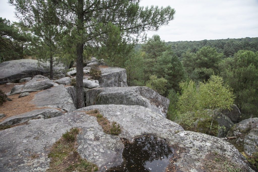 Que visiter autour de Paris La Forêt de Fontainebleau