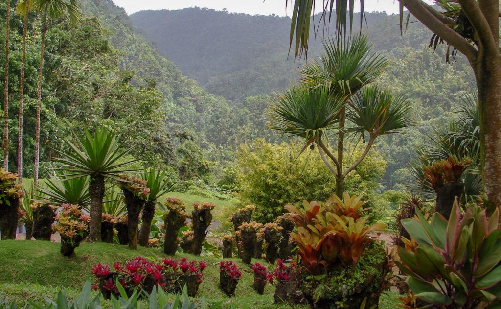 Martinique ou Guadeloupe ? Et pour les parcs nationaux JARDIN DE BALATA MARTINIQUE