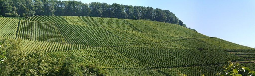 Que voir autour de Perpignan ? circuit de la route des vins du Roussillon