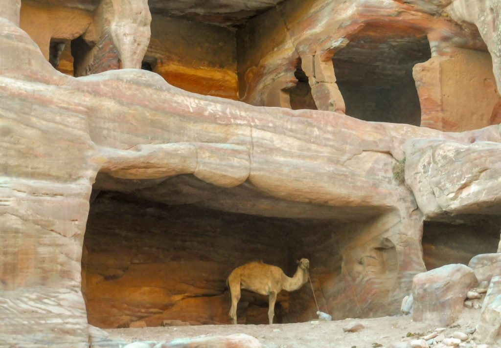 Rencontre insolite lors de notre circuit Petra en 1 jour