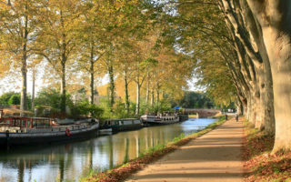 Toulouse avec un chien - Meilleur hôtel acceptant les chiens à Toulouse près d espaces verts